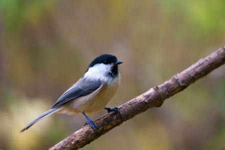 The willow tit sitting on the branch Stock Photo - 5683058