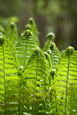 The fern leaves on the sunlight glares background