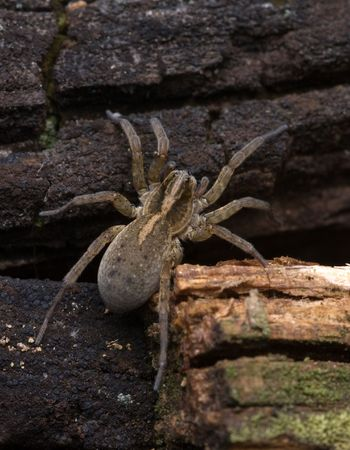 The image with the spider on a ground Stock Photo - 7881484