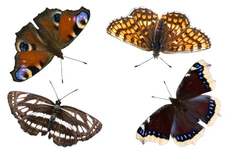 The four beautiful butterflies over white background Stock Photo