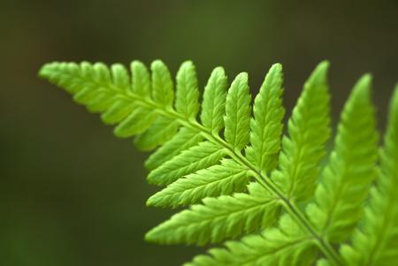 einrollen: Die Rotation des jungen wachsenden Fern leaf