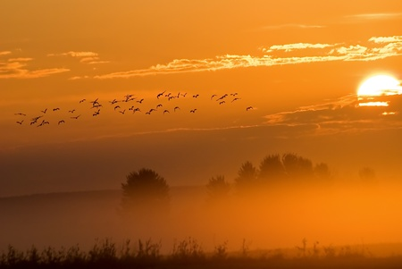 The birds flock on a sunrise background  Stock Photo