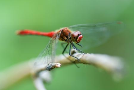 Kuru gövde üzerinde oturan yusufçuk