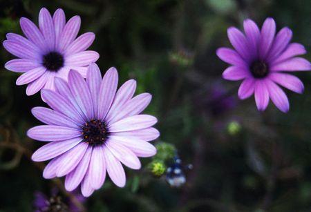 purples: Purples
