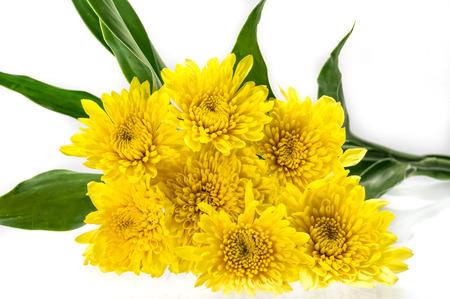 yellow gerbera isolated on: Yellow Gerbera daisy isolated on white.