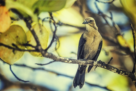 Caribbean Bird On The Tree Branch Stock Photo