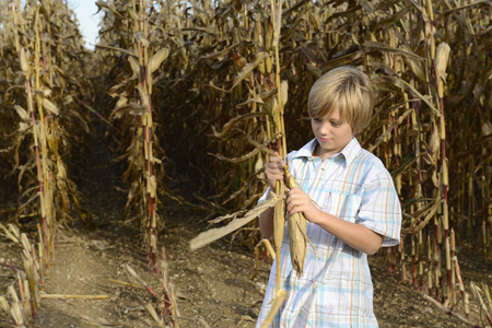 non urban 1: Boy playing with corn plant in cornfield, Bavaria, Germany