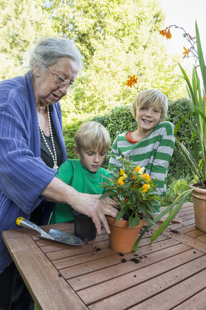 10 11 years: Grandmother repotting plant with her grandsons LANG_EVOIMAGES