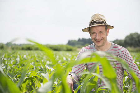 Mature man worried about his corn field
