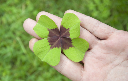 mojo: Four-leaf clover on hand palm, elevated view, close-up