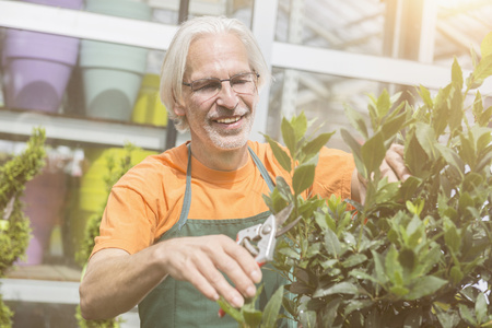 looking for job: Male gardener pruning a plant in greenhouse, Augsburg, Bavaria, Germany