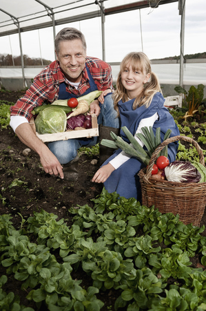 cowering: Father and daughter harvesting vegetables in greenhouse