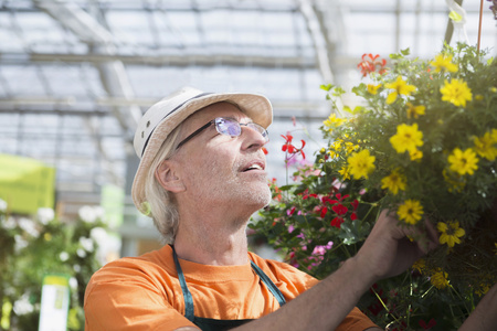 looking for job: Male gardener looking at potted plant in greenhouse, Augsburg, Bavaria, Germany