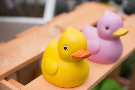 shop for animals: Close-up of rubber ducks in garden centre, Augsburg, Bavaria, Germany LANG_EVOIMAGES