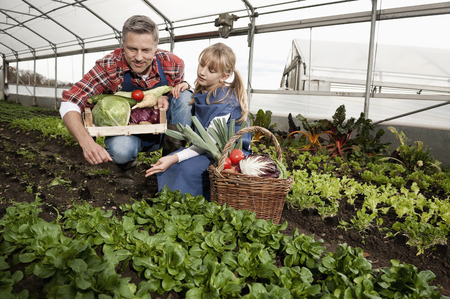 scrutinise: Father and daughter harvesting vegetables in greenhouse