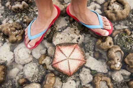 sandalias: Estrellas de mar y los pies de un hombre, Koh Lipe, Tailandia LANG_EVOIMAGES
