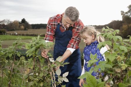 Farmer explaining daughter plant on field