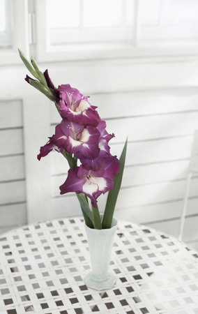 Gladiolus Flowers In Vase On Table At Glass House Bavaria Germany