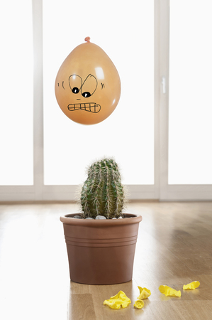 conquering adversity: Close-up of a scared balloon above a cactus plant, Bavaria, Germany