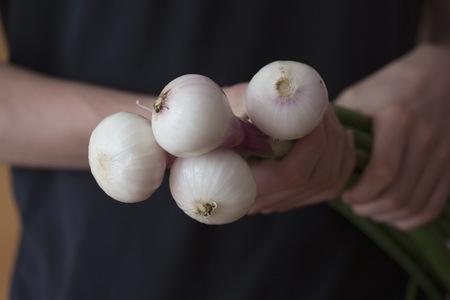 freiburg: Mid section view of a man holding spring onions, Freiburg im breisgau, Baden-württemberg, Germany