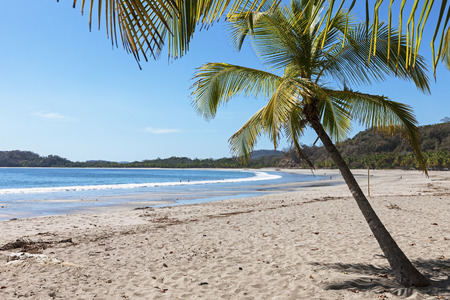 Palm trees on the beach, Samara, Costa Rica LANG_EVOIMAGES