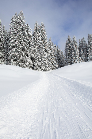 Snowmobile track on snow by snowcapped trees LANG_EVOIMAGES