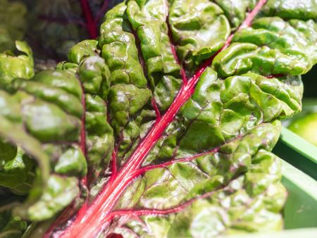 Close-up of fresh chard leaf LANG_EVOIMAGES