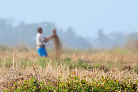 economic activity: Indian village ,  agriculture field in winter morning.  Agriculture is a major economic activity in India.