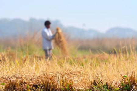 actividad econ�mica: Pueblo indio, campo de la agricultura en la ma�ana de invierno. La agricultura es una actividad econ�mica importante en la India.