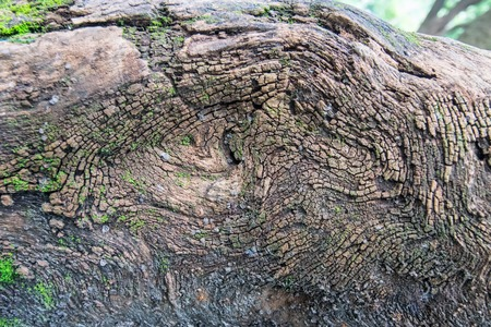 howrah: Abstract stock image of tree root, Botanical Garden, Howrah, West Bengal, India Stock Photo