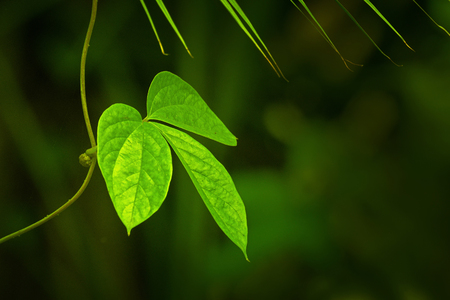 Green leaves, texture of nature, stock photograph with natural background