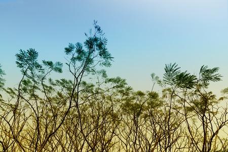 Leafless tree branches of winter season, season specific image of nature. Shot at Kolkata, Calcutta, West Bengal, India Stock Photo