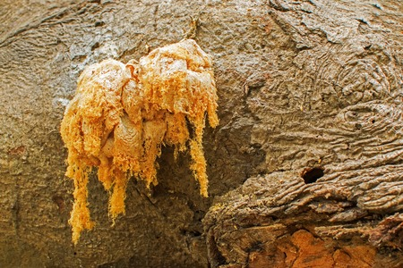 Fungus on a tree root, nature image