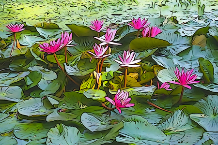 Oil paint illustration of Nymphaea nouchali or Nymphaea stellata, common name red water lily, is a water lily of genus Nymphaea. the national flower of Sri Lanka and Bangladesh.