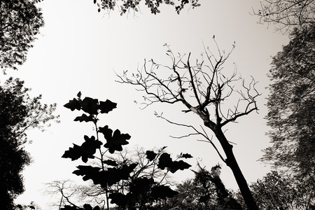 Black and white image of plant and tree - Indian nature stock image.