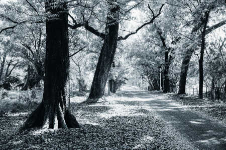 Black and white image of trees - Indian nature stock image.