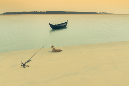Moody image of a boat on water tied by a rope with an anchor on river bed while a lazy dog lying nearby, Tajpur, West Bengal, India. Minimalistic image.