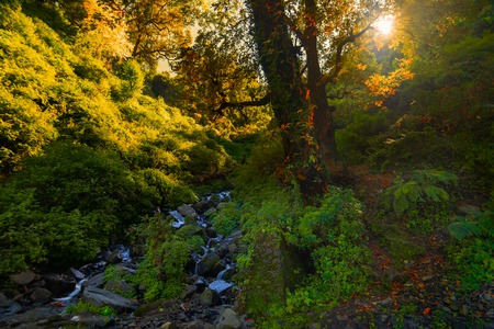 Sun rises behind a tree in Garhwal forest, Uttarakhand, India. A small river in foreground.