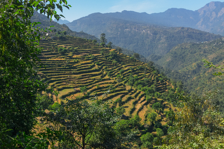 High altitude agriculture terrace filed of Garhwal Himalayas, Uttaranchal, India