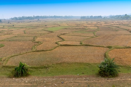Green scenic beauty of a rural agriculture field in Indian village with blue sky - Purulia, West Bengal, India