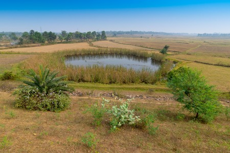 Green scenic beauty of a rural pond in Indian village with blue sky - Purulia, West Bengal, India
