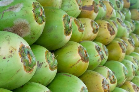 A series of green coconut on the roadside, piled up for sale as a fast food drink for passer by. The green coconut is a very popular fruit drink in India during hot seasons.