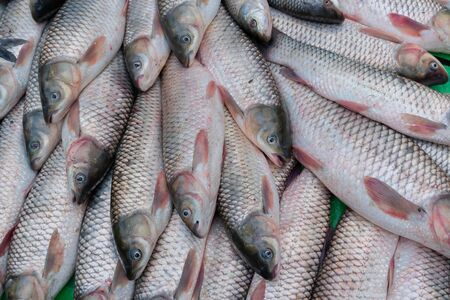 The rohu, rui, or roho labeo (Labeo rohita) is a species of fish popular in India for it's taste. displayed for sale at Territy Bazar, Kolkata, West Bengal, India..