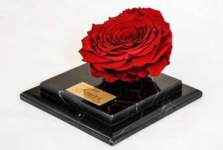 enchanted red rose on the black marble platform as an exclusive present for the mother's day Stock fotó
