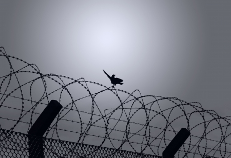 Bird on barbed wire photo