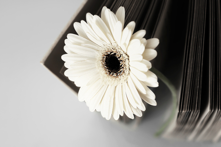 Flower and old blank book or photograph album