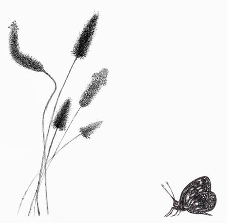 Greeting card with grass and butterfly