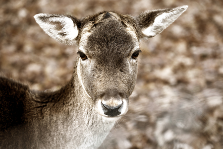 Close-up of a head of a young deer