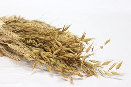 oat Stock Photo