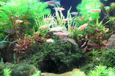 biotype:  aquarium with plants with small fishes Stock Photo